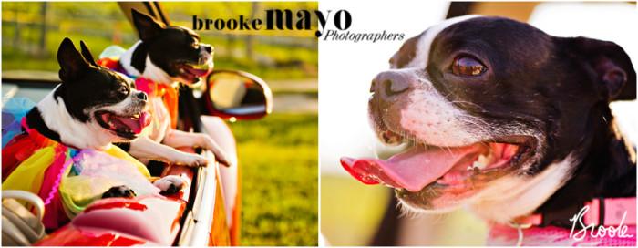 Outer Banks pet portraits