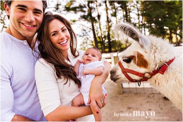llama_newborn_1