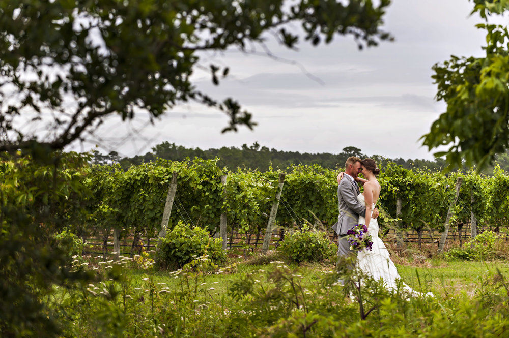 vineyard - weddings at sanctuary vineyards