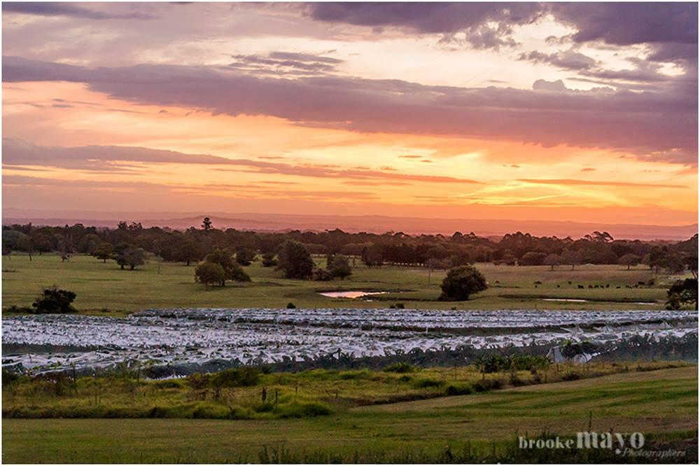 Australian vineyard sunset