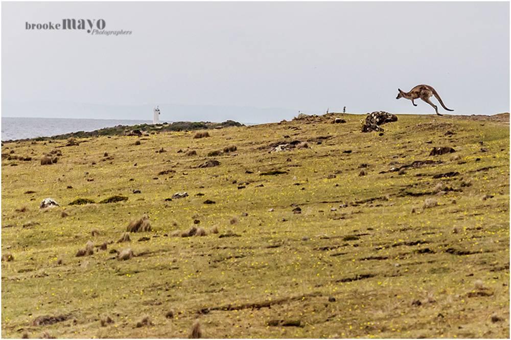 Running Kangaroo