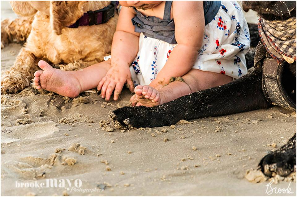 baby and dogs on beach