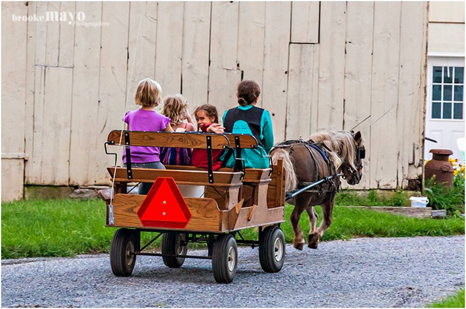 Amish Horse and Buggy farm
