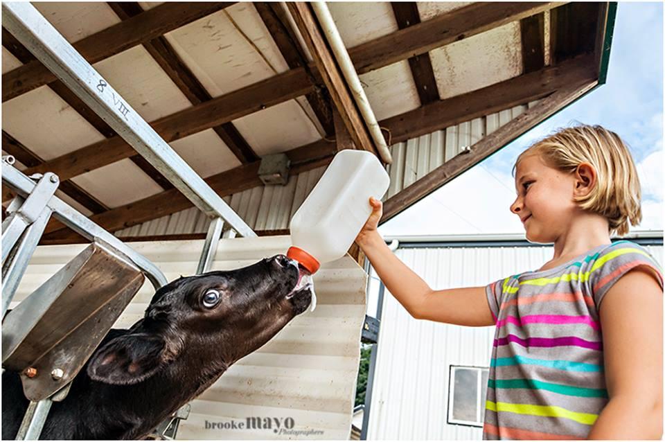 Land o lakes Dairy Farm
