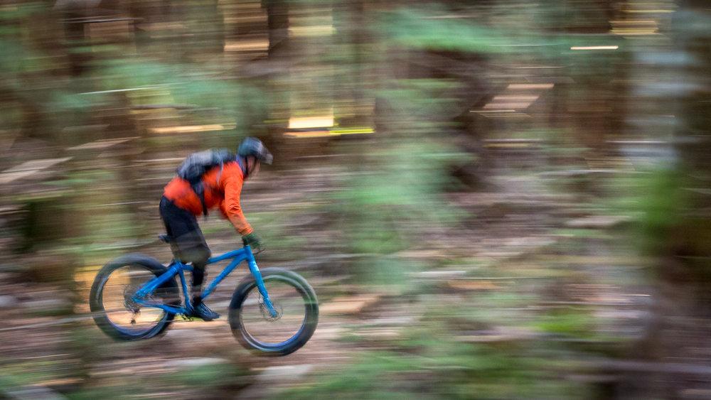 Bigshot cruising the woods.jpg
