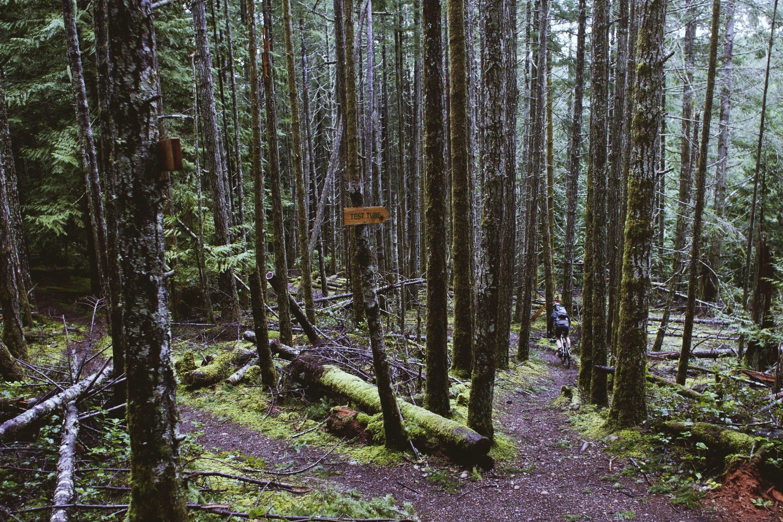 Test Tube Trail // Hornby Island // Nicholas Kupiak