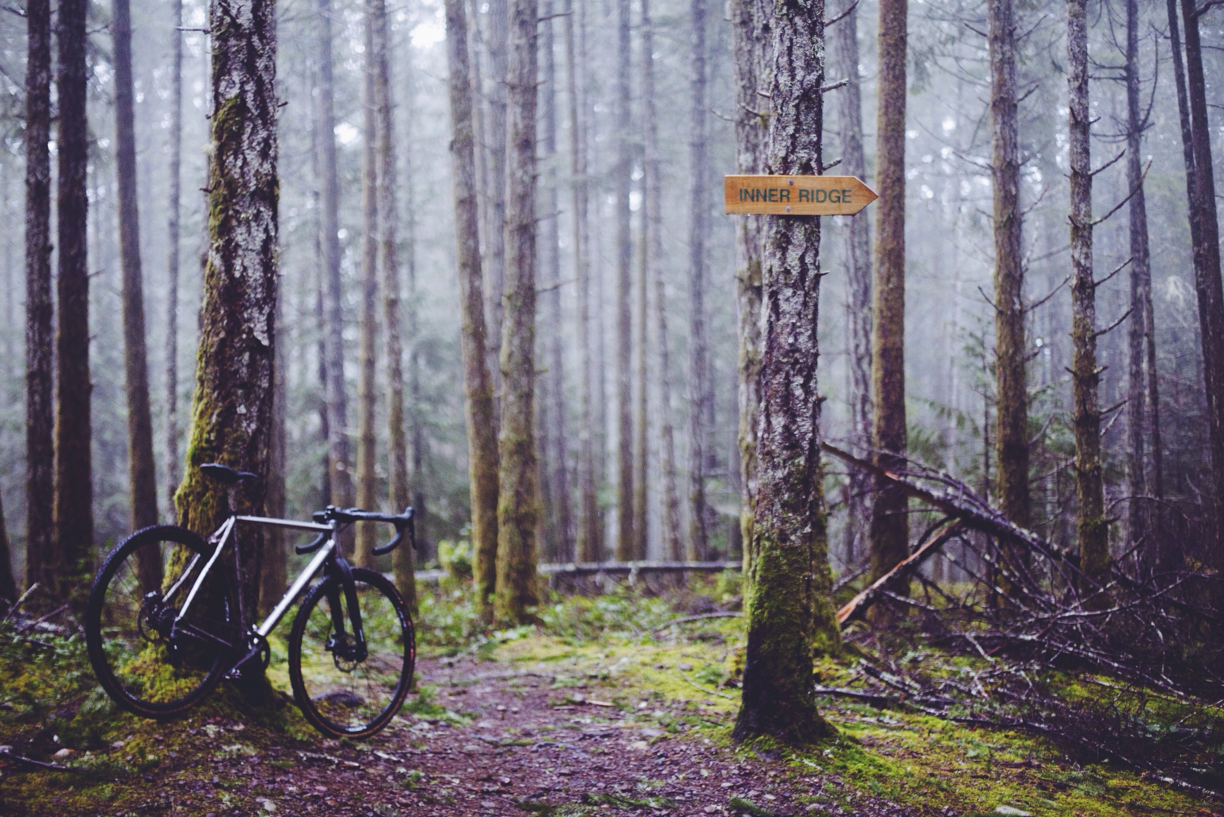Four Dead Aliens Trail // Hornby Island // Nicholas Kupiak