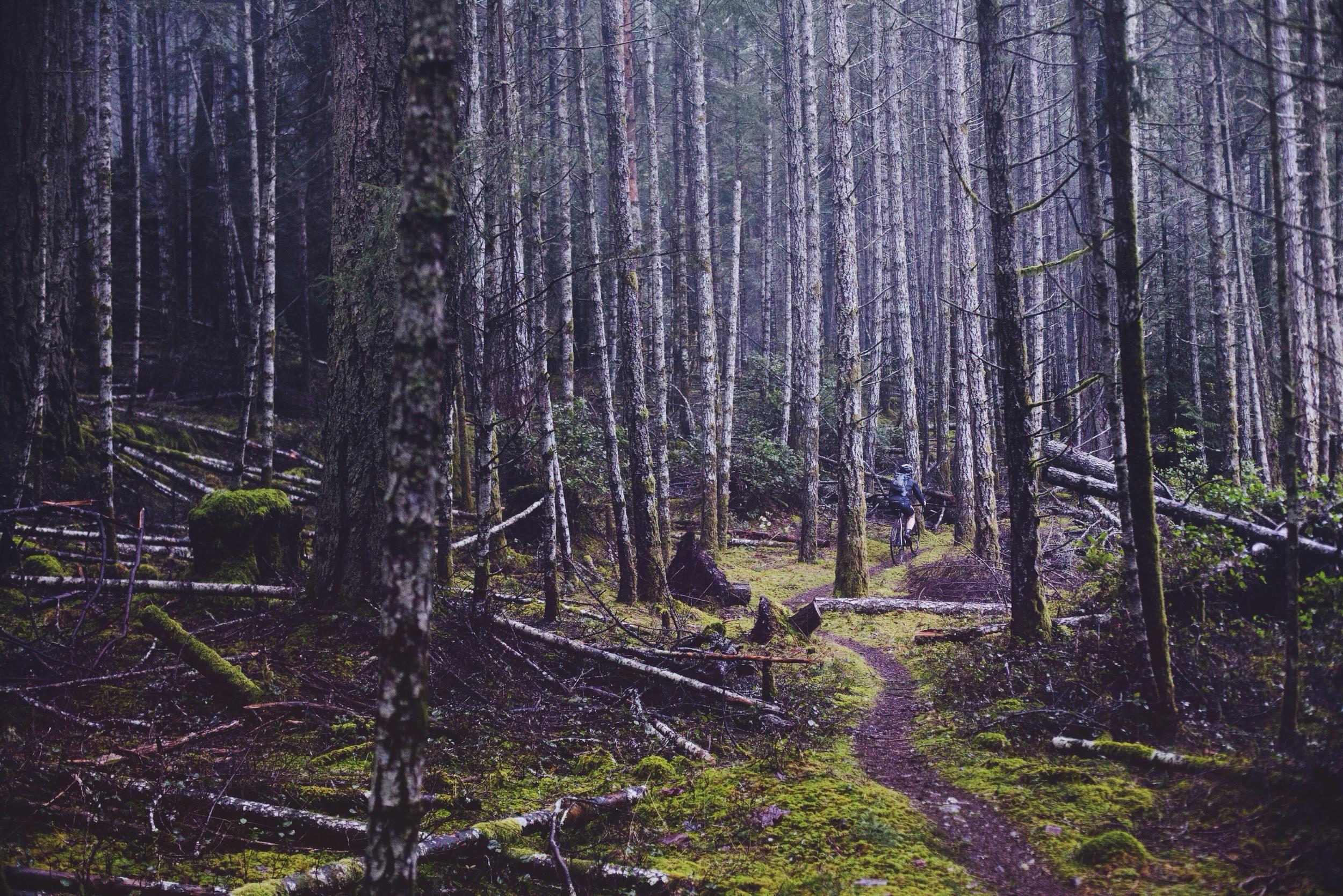 Inner Ridge Trail // Hornby Island // Nicholas Kupiak