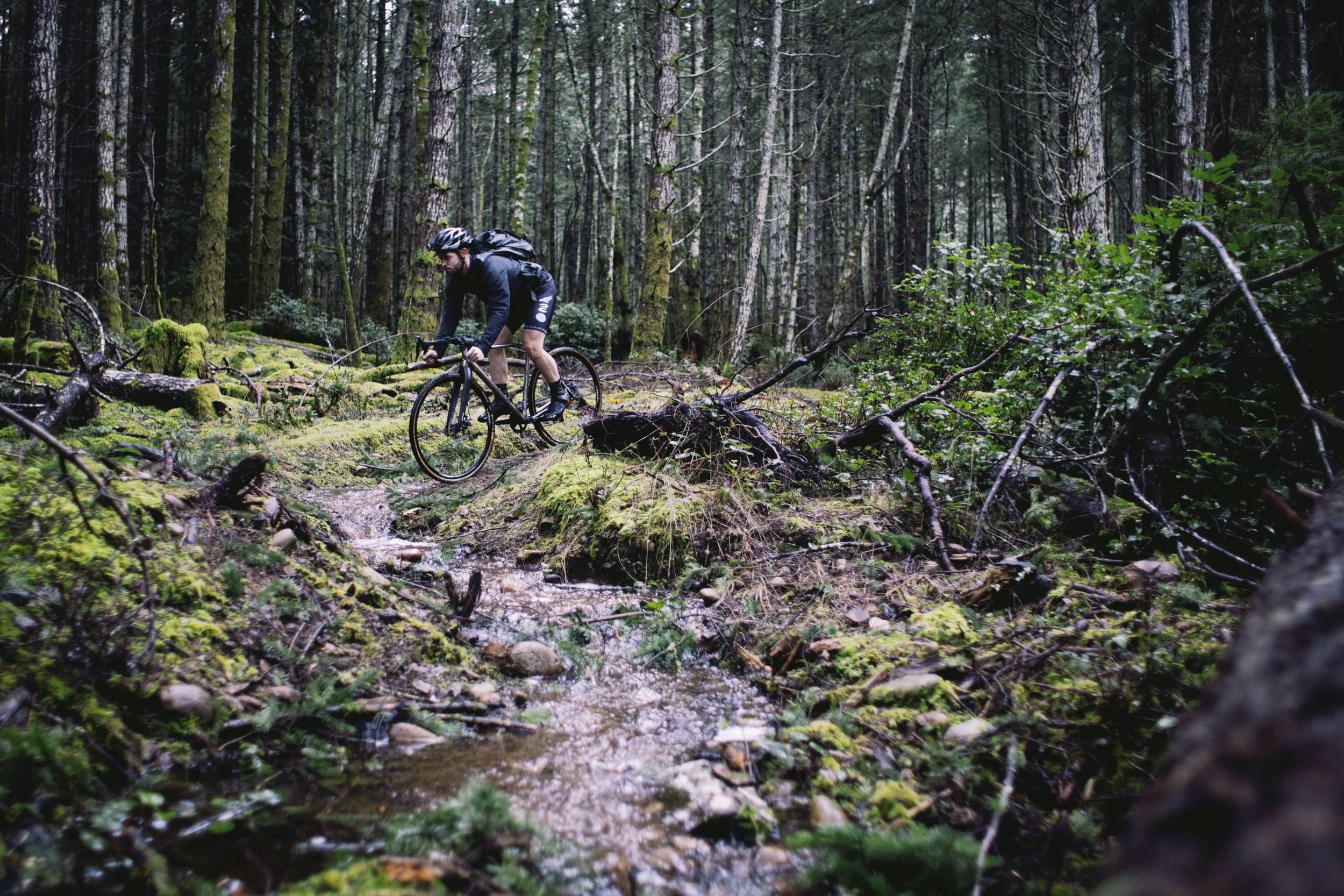 Summit Trail // Hornby Island // Nicholas Kupiak