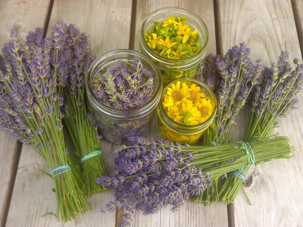 Lavender, Arnica, and St. John's Wort flowers