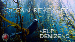 Kelp Cover Image w Text.jpg