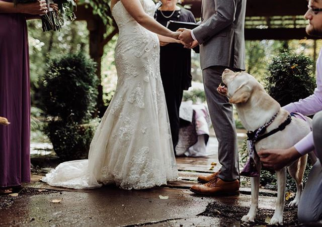 When even your DOGS know how in love you two are 😭😍 . . . . . . . . #pnwweddingphotographer #spreadthelovephotogs #featurepallette #bohoweddinginspo #howyouglow #pnwphotographer #pnwweddings #dirtybootsandmessyhair #momentsovermountains #dogwedding #weddingswithdogs #wanderingweddings #muchlove_ig #radlovestories #elopementlove #radstorytellers #wildhairandhappyhearts