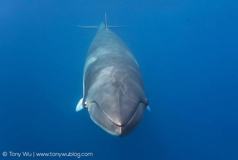 Cheeky Whale