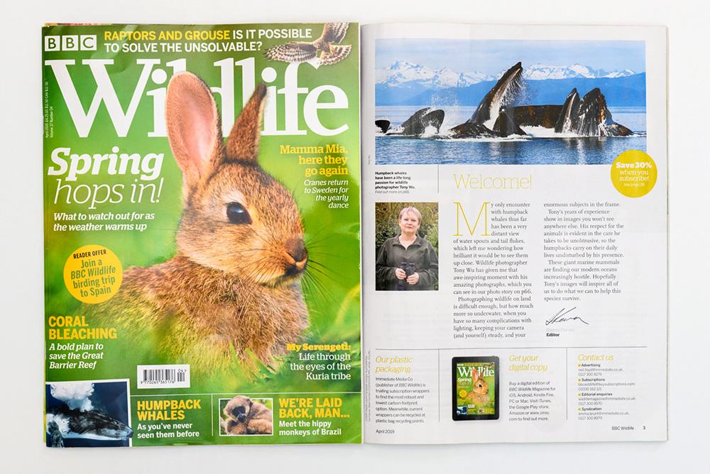 BBC Wildlife magazine, April 2019