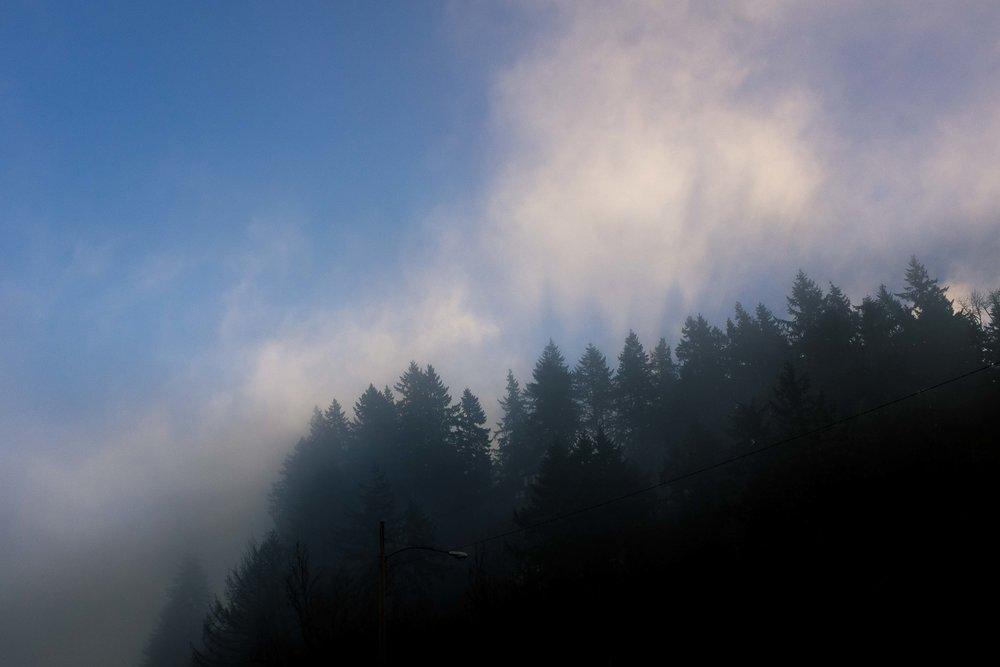 eugene-trees-1.jpg