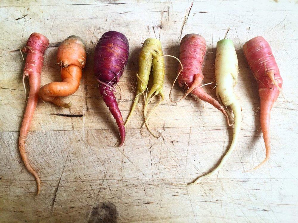 hojasana_recetas-5 dias 02 zanahorias.jpg