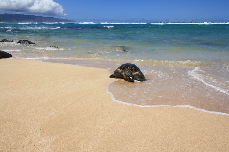 turtle-bay-