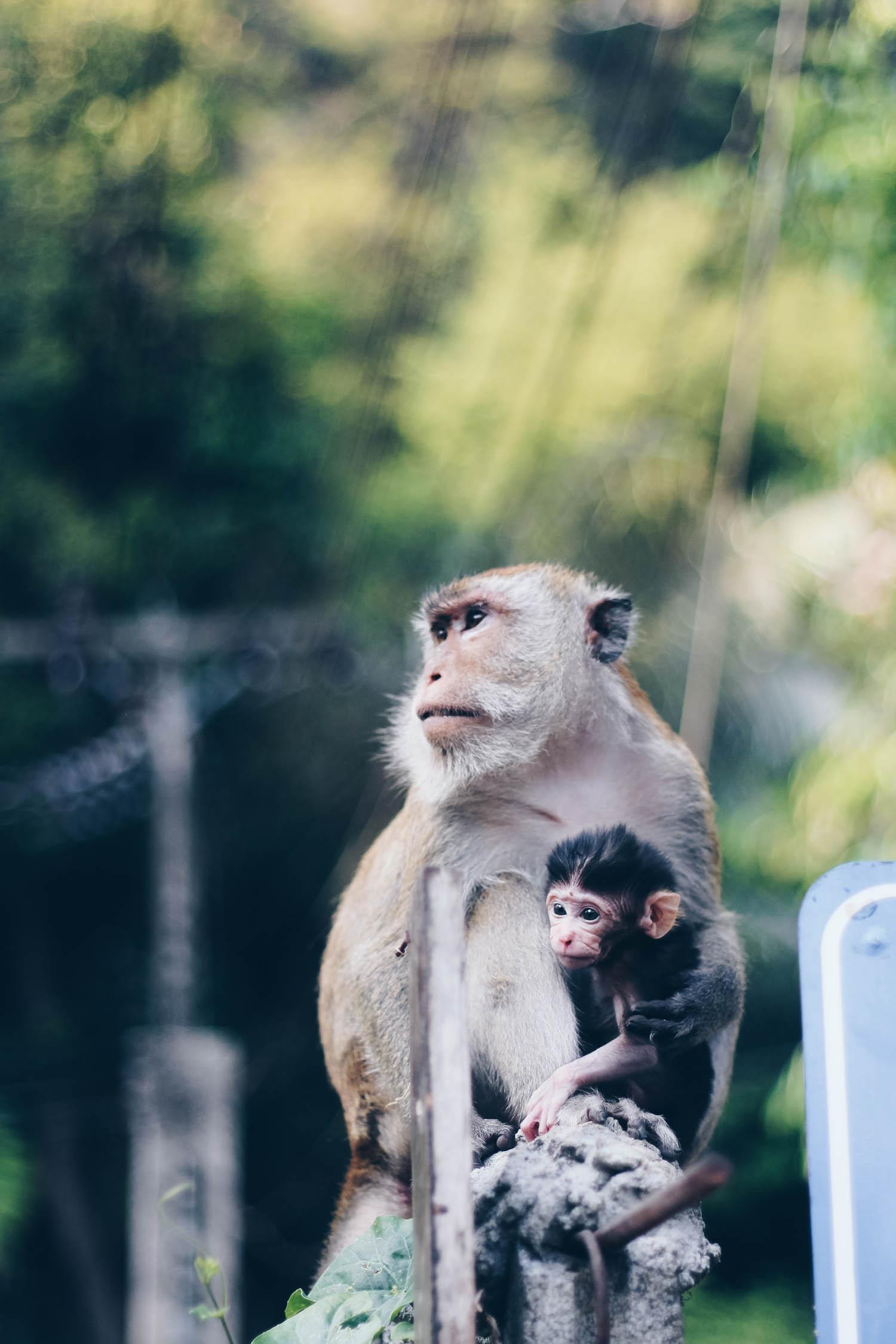 Railay beach monkeys