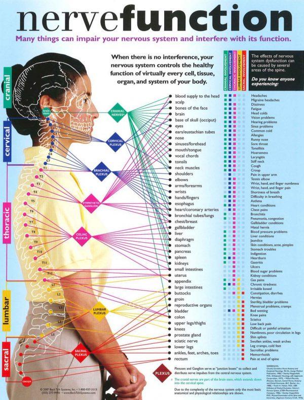 Nerve_System_Denver_chiropractor.jpg