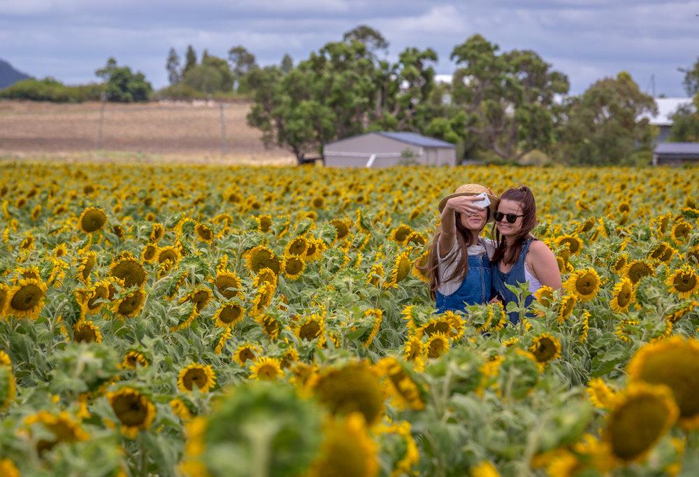 sunflowers-0070.jpg