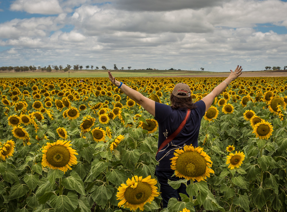 sunflowers-0080.jpg