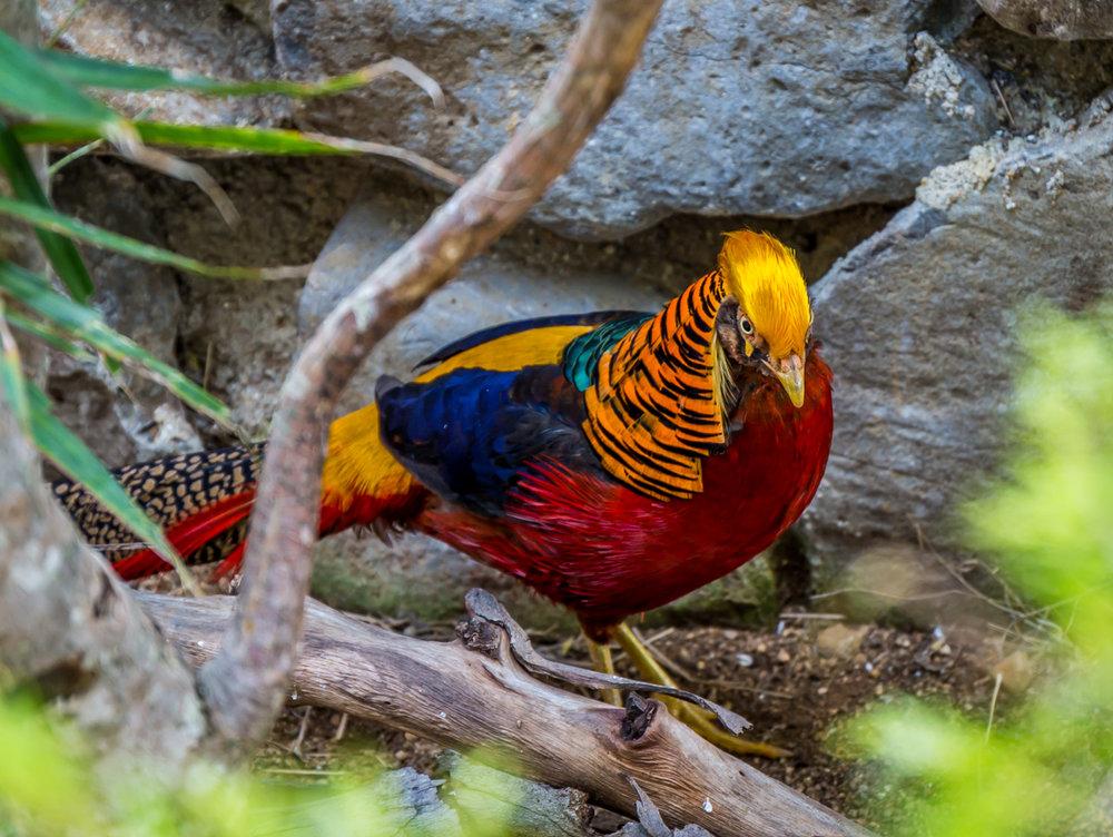 Maleny birds0096.jpg