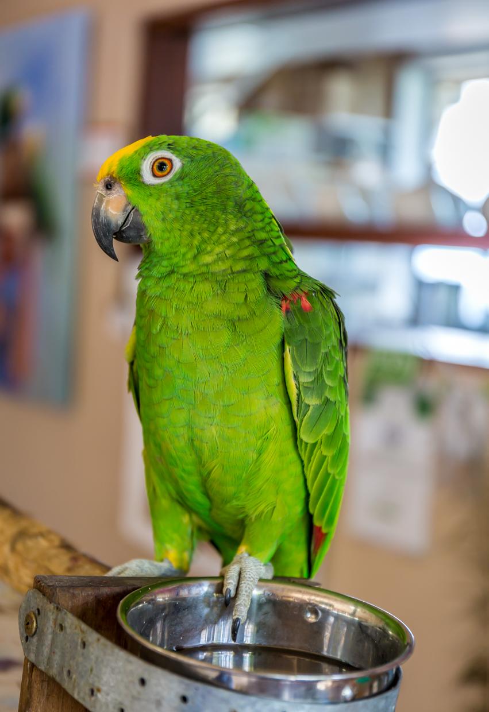 Maleny birds0102.jpg