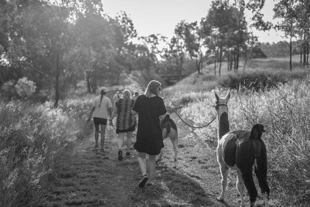 Llama walk-0099-Edit.jpg