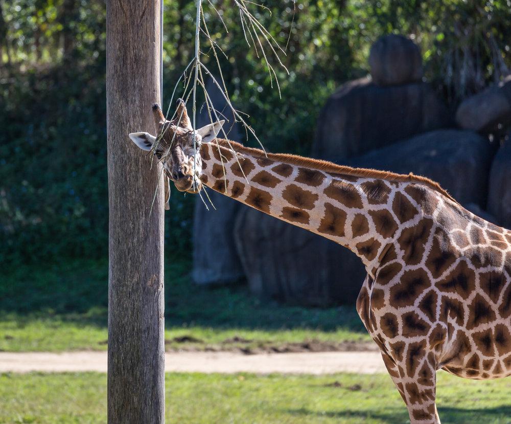 Australia Zoo-0036.jpg