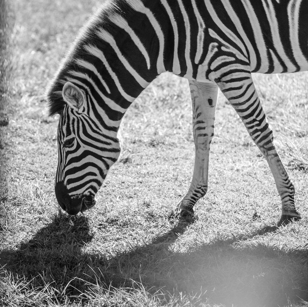 Australia Zoo-0038.jpg