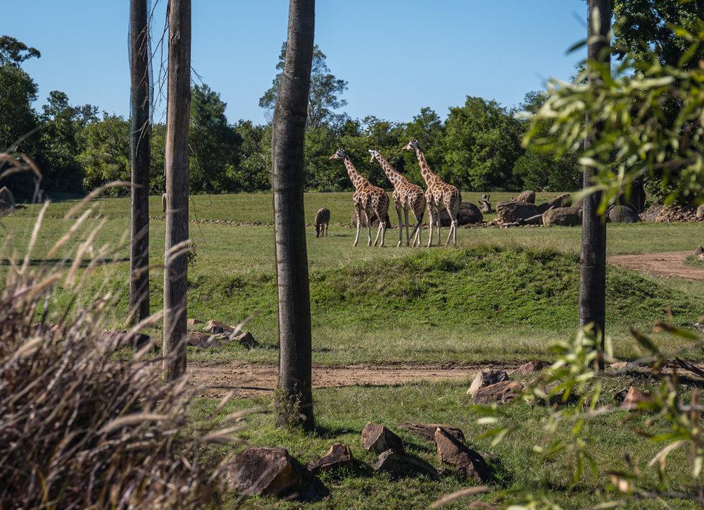 Australia Zoo-0048.jpg