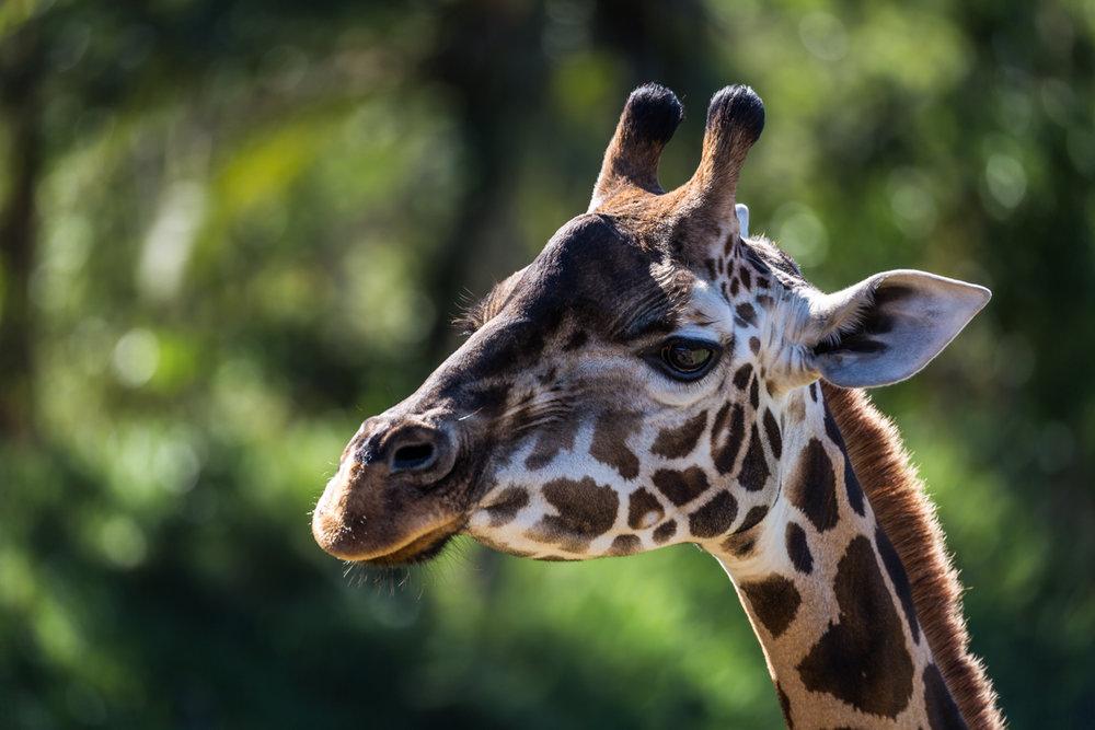 Australia Zoo-0055.jpg