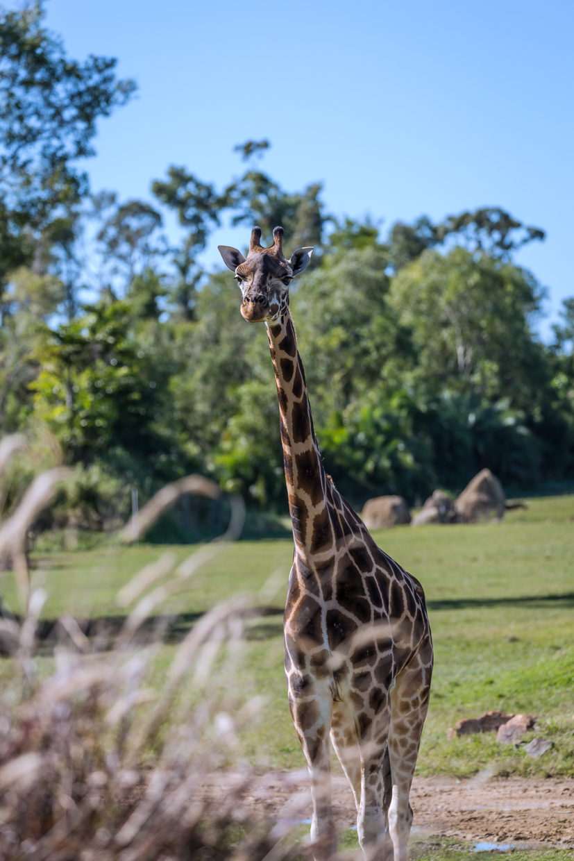 Australia Zoo-0061.jpg