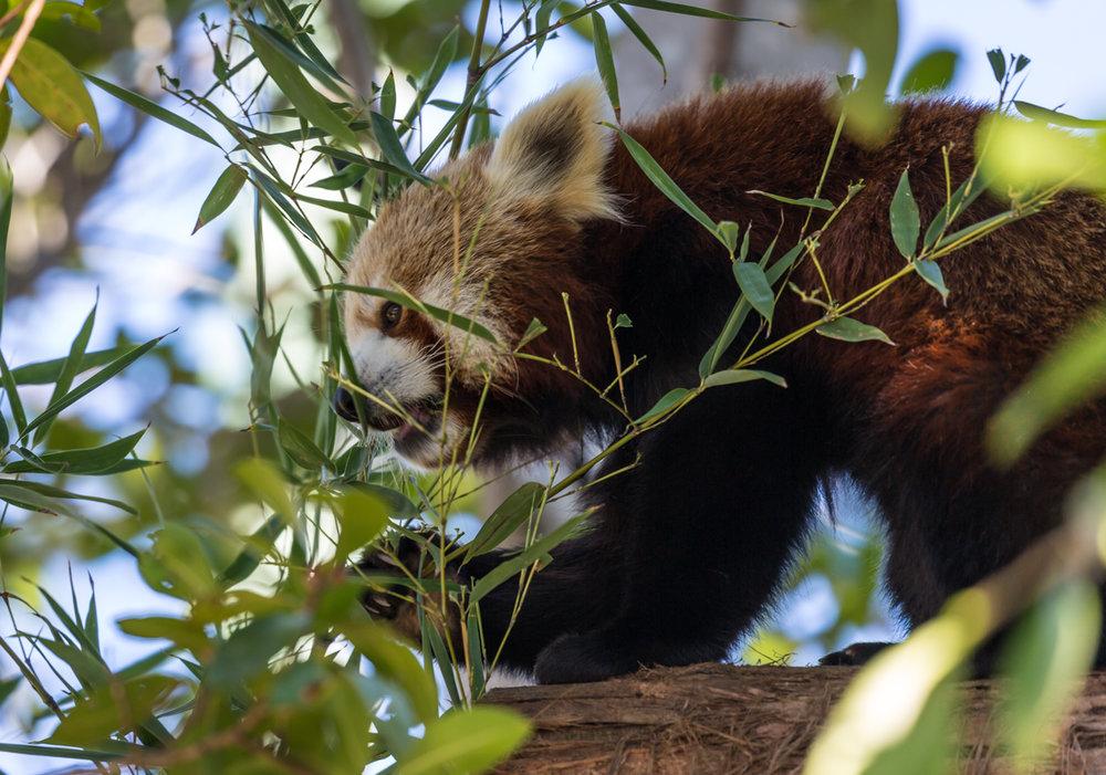 Australia Zoo-0085.jpg