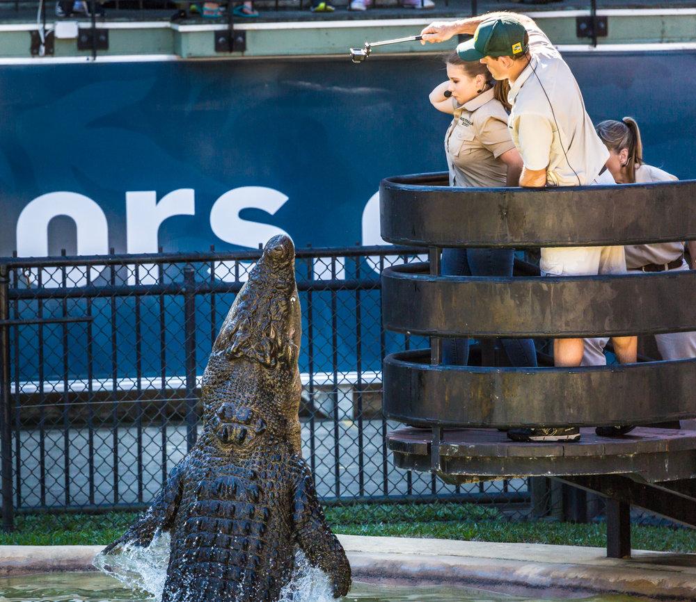 Australia Zoo-0264.jpg