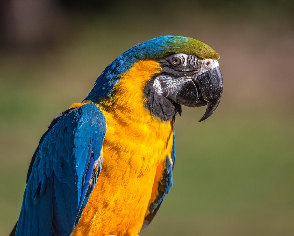 Australia Zoo-0343.jpg