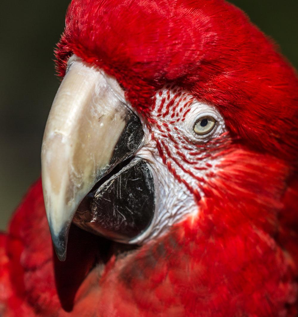 Australia Zoo-0480.jpg