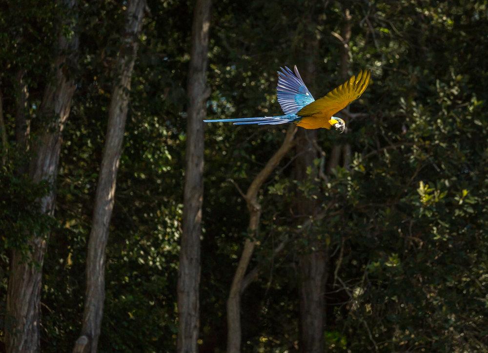 Australia Zoo-0405.jpg