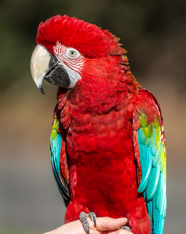 Australia Zoo-0470.jpg