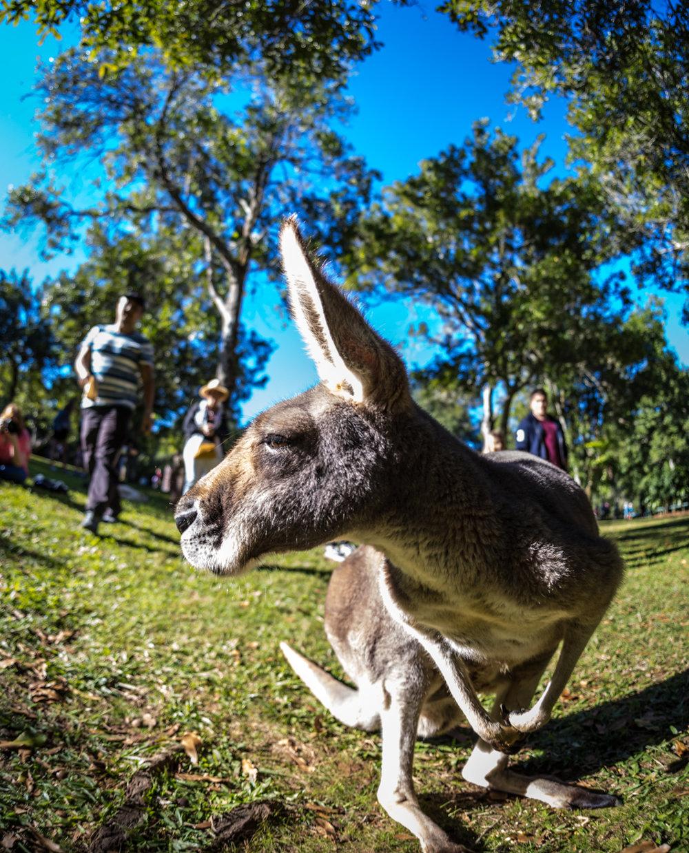 Australia Zoo-0505.jpg