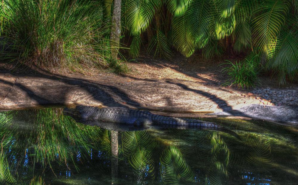 Australia Zoo-0532HDR.jpg