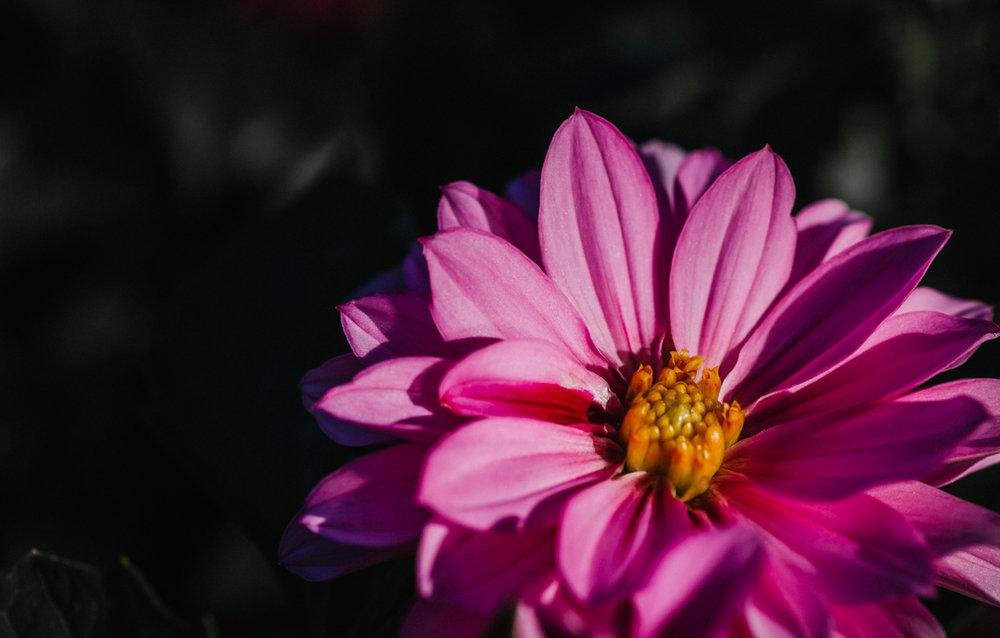 Botanic-0072.jpg