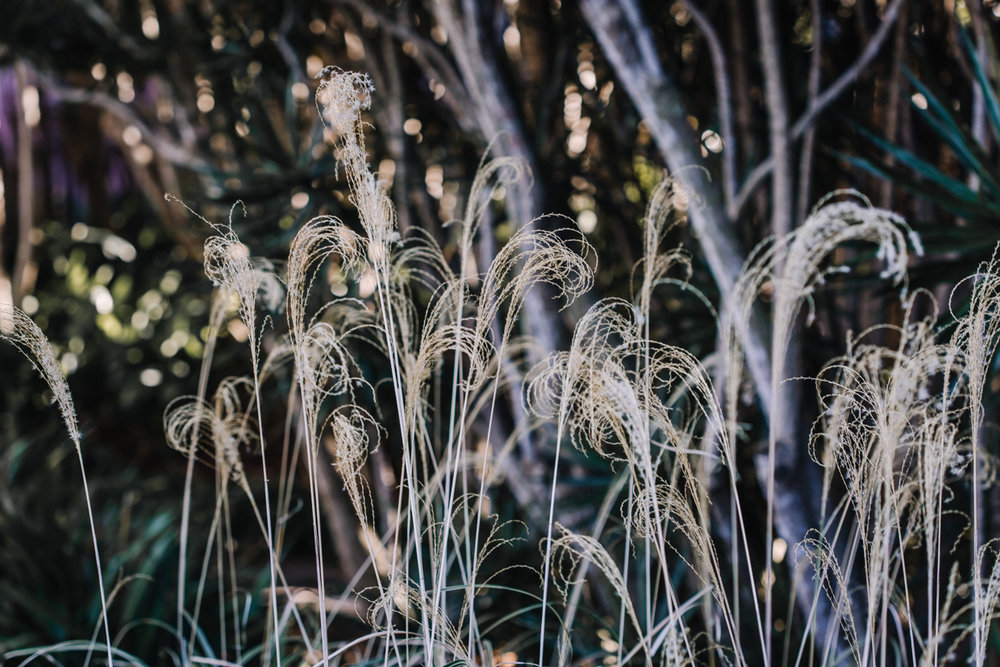 Botanic-0043.jpg
