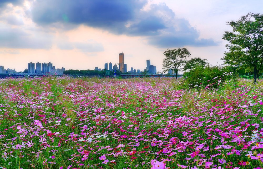 Ichon Hangang Park. Image credit:  travel oriented