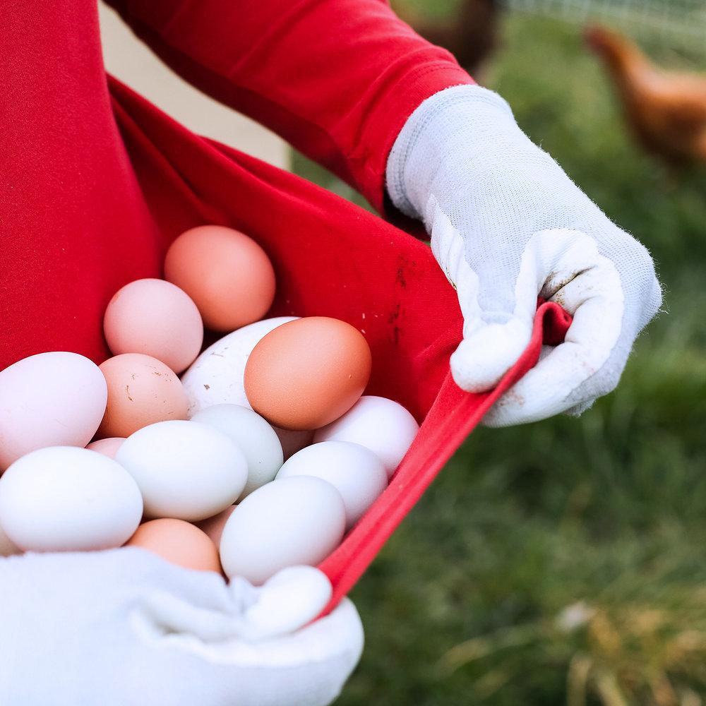 Square_eggs2.jpg
