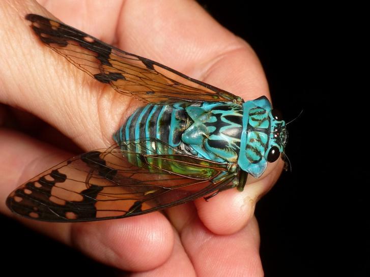 Las-Vegas-Bug-ID-1.jpg
