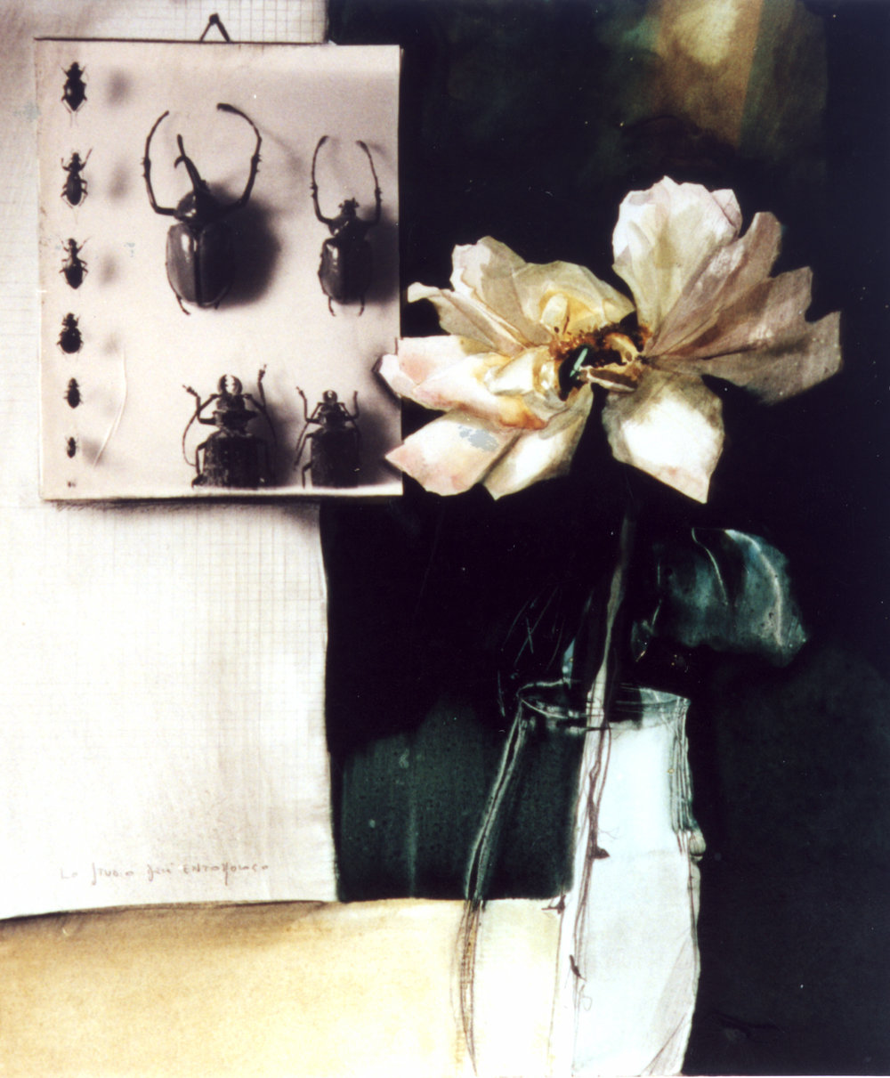 entomologia, 2003