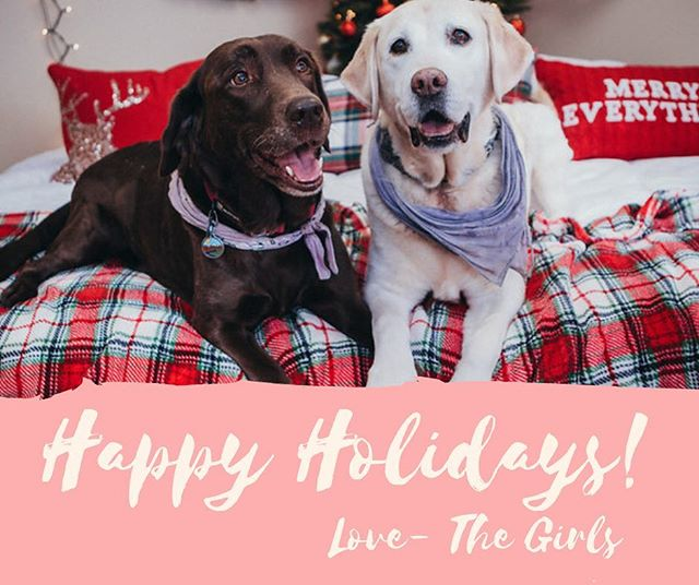 What did your pets get from Santa Paws this year 🎅🏼 Were your pets on the naughty or nice list?? 🎁  We hope everyone is having a wonderful holiday season! We are all looking forward to ringing in the new year surrounded by all of our friends, old and new 🐾❤️