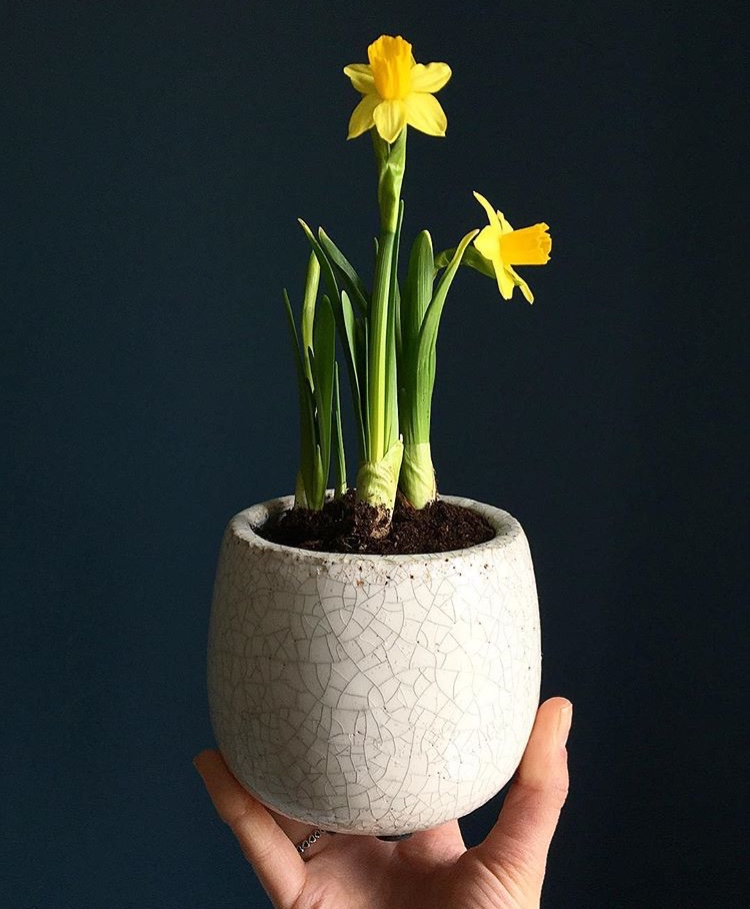 Amalfi Pot - Perfect for small bulbs or succulents