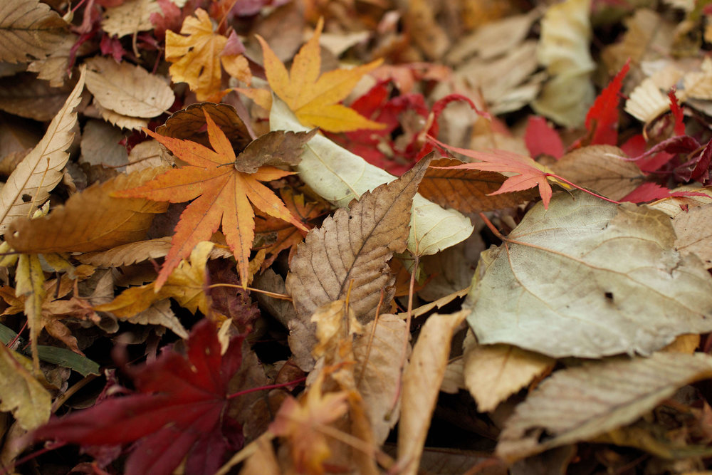 Autumn - Allow this season to be a chance to nurture yourself and live well.